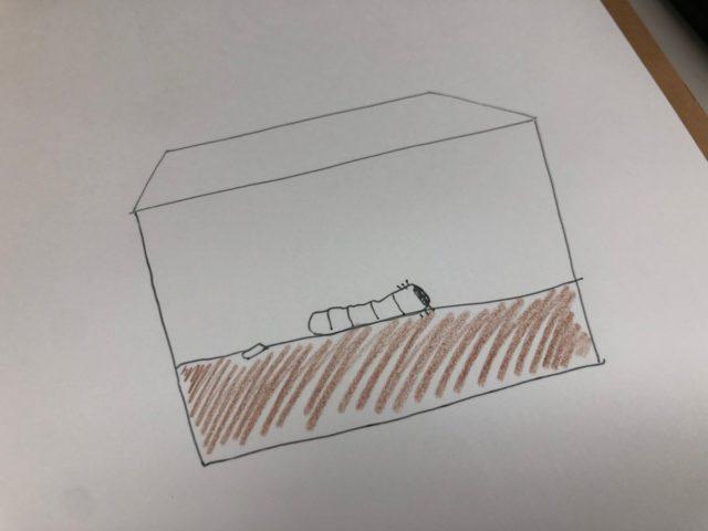 カブトムシと住まいの環境