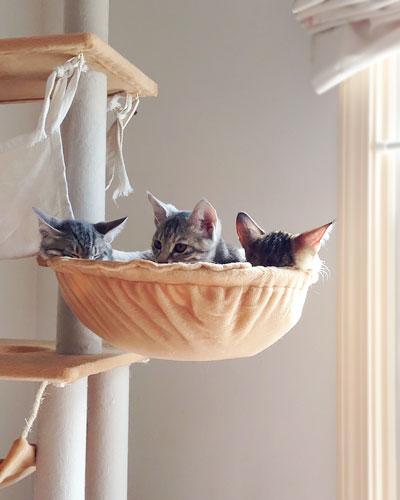 猫の庭特集