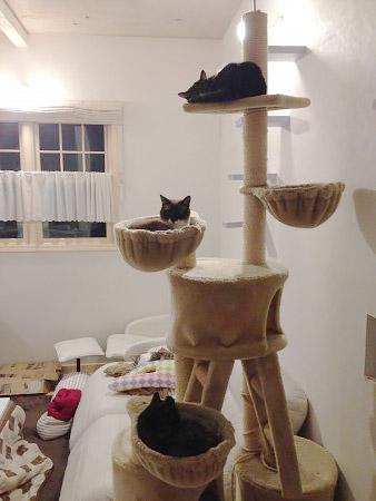 猫と暮らしています。【再録】